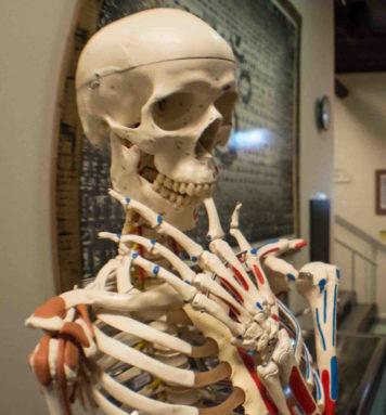 Skelett - Hot Yoga Malm